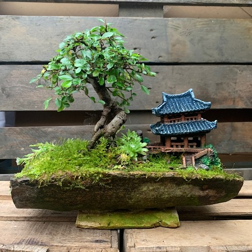 Paisaje Penjing de bonsái olmo en teja medidas 31x33cm