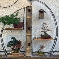 #expositor #bonsai #penjing #penjinggarden Bonsaido.es